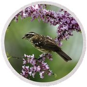 Redbud With Grosbeak Round Beach Towel