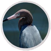Reddish Egret 3 Round Beach Towel