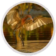Reddish Egret In Golden Sunlight Round Beach Towel