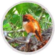 Round Beach Towel featuring the photograph Redheaded Hummingbird II by Lanita Williams