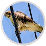Redtailed Hawk Round Beach Towel