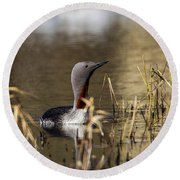 Redthroated Loon Round Beach Towel