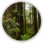 Redwood Trees And Rhododendron Flowers Round Beach Towel