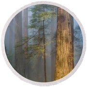 Redwoods In The Blue Mist Round Beach Towel