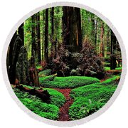 Redwoods Wonderland Round Beach Towel