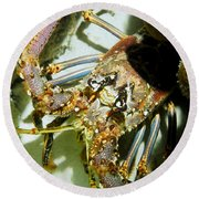 Round Beach Towel featuring the photograph Reef Lobster Close Up Spotlight by Amy McDaniel