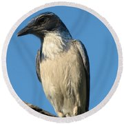 Regal Western Scrub Jay Round Beach Towel