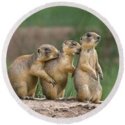 Round Beach Towel featuring the photograph Relaxing Utah Prairie Dogs Cynomys Parvidens Wild Utah by Dave Welling