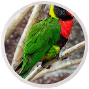 Round Beach Towel featuring the photograph Resting Lory by Sennie Pierson