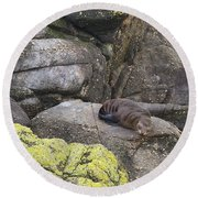 Round Beach Towel featuring the photograph Resting Seal by Stuart Litoff
