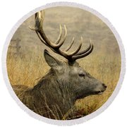 Resting Stag Round Beach Towel
