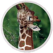 Reticulated Giraffe Samburu Kenya Round Beach Towel