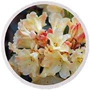 Rhododendron Nancy Evans Round Beach Towel