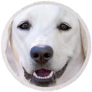 Round Beach Towel featuring the photograph Riley by Stephen Anderson