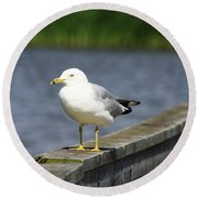 Ring-billed Gull Round Beach Towel