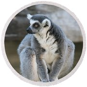 Round Beach Towel featuring the photograph Ring-tailed Lemur #3 by Judy Whitton