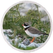 Ringed Plover On Rocky Shore Round Beach Towel