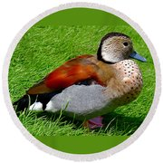 Ringed Teal Drake Round Beach Towel
