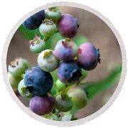 Ripening Blueberries Round Beach Towel by John Haldane