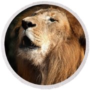Round Beach Towel featuring the photograph Roar - African Lion by Meg Rousher