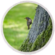 Robin At Rest Round Beach Towel by Spikey Mouse Photography