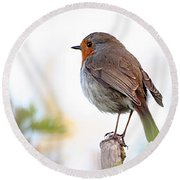 Robin On A Pole Round Beach Towel