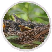 Robins In The Nest Round Beach Towel by Debbie Portwood