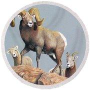 Rocky Mountain Ram Ewe And Lamb Round Beach Towel