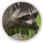 Rocky Raccoon Round Beach Towel by Sharon Talson