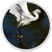 Rookery 15 Round Beach Towel