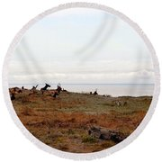 Roosevelt Elk And The Ocean Round Beach Towel