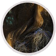 Round Beach Towel featuring the photograph Tree Root by Yulia Kazansky