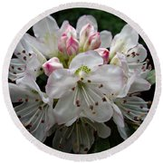 Rose Bay Rhododendron Round Beach Towel