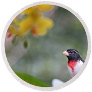 Rose Breasted Grosbeak Photo Round Beach Towel