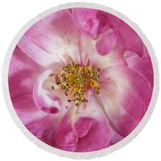 Rose Round Beach Towel by Elaine Teague