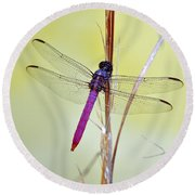 Roseate Skimmer Dragonfly Round Beach Towel