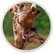 Rothschild Giraffe With Calf Round Beach Towel
