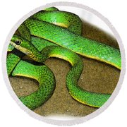Rough Green Snake, Illustration Round Beach Towel
