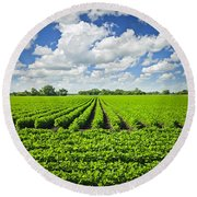 Rows Of Soy Plants In Field Round Beach Towel