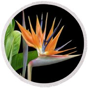 Royal Beauty I - Bird Of Paradise Round Beach Towel