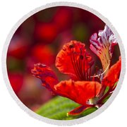 Royal Poinciana - Flamboyant - Delonix Regia Round Beach Towel