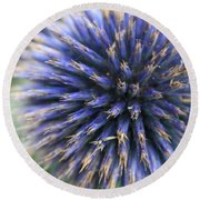 Royal Purple Scottish Thistle Round Beach Towel