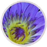 Royal Purple Water Lily #11 Round Beach Towel