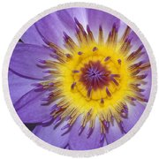 Royal Purple Water Lily #12 Round Beach Towel