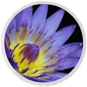 Royal Purple Water Lily #14 Round Beach Towel