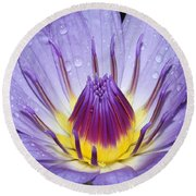 Royal Purple Water Lily #3 Round Beach Towel