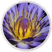Royal Purple Water Lily #5 Round Beach Towel by Judy Whitton
