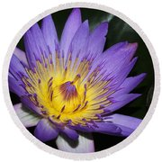 Royal Purple Water Lily #6 Round Beach Towel