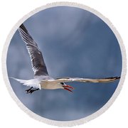 Royal Tern 1 Round Beach Towel by Ludwig Keck