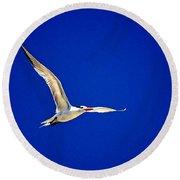 Royal Tern 2 Round Beach Towel